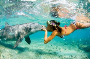 Diplomacia delfinica
